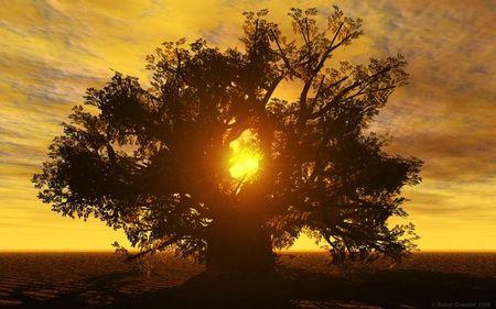 tree-of-life-by-rahul-chandel