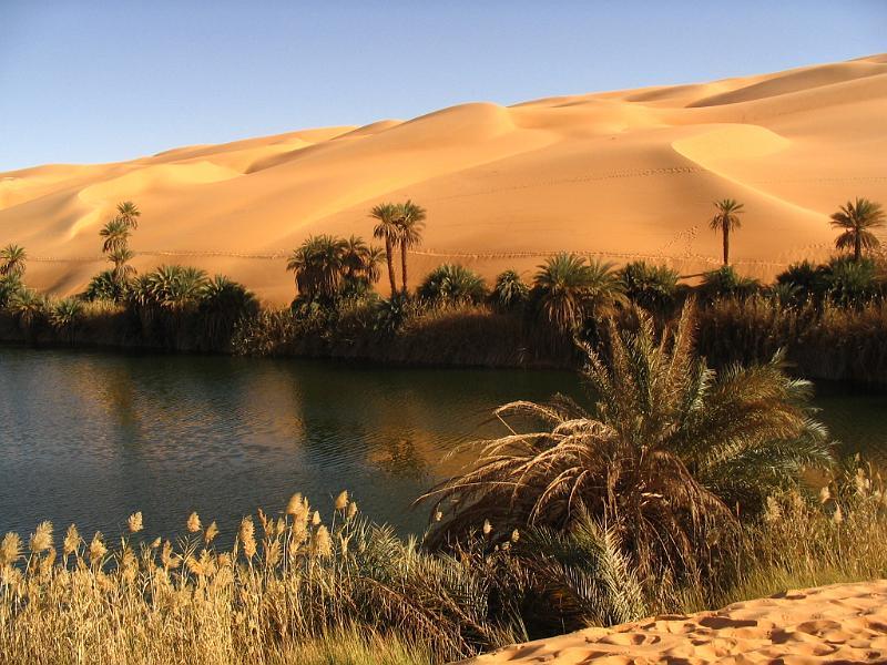 desert-oasis_1