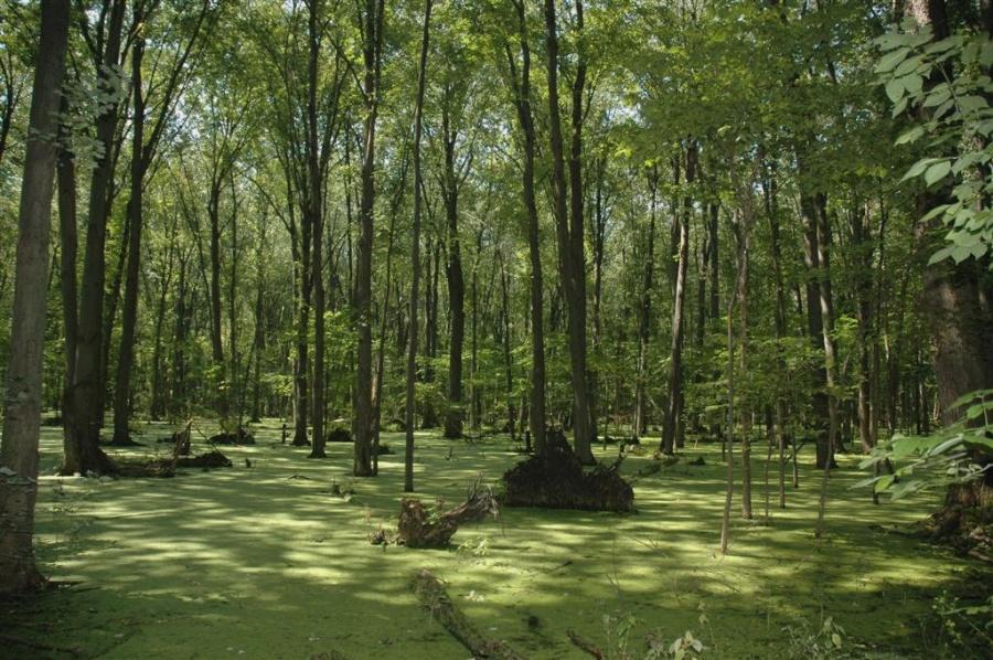 swamp-large-1