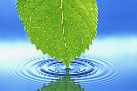 beautiful leaf wallpaper