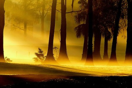 !!~~!! morning-fog