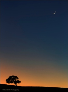 Oak and Crescent Moon