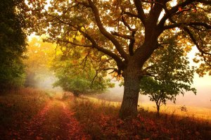 _meditation_of_autumn__by_janek_sedlar-d5ggia7