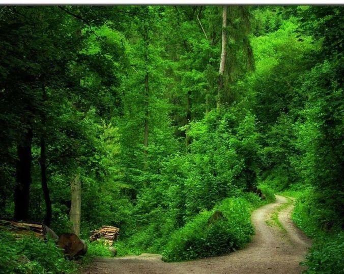 Green-Forest-Wallpaper-green-20036570-1280-1024
