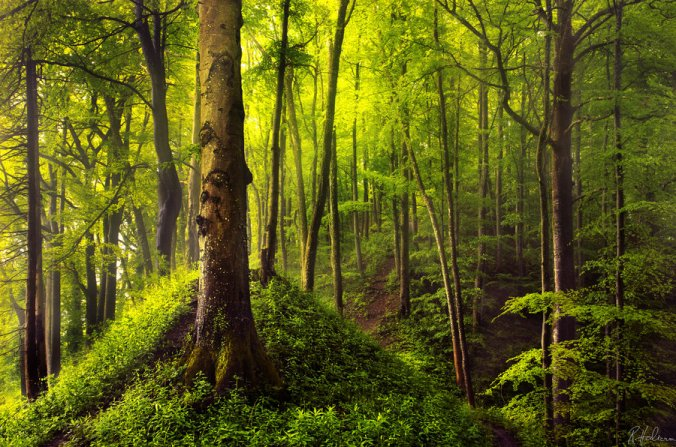 ancient_forest_by_robinhalioua-d5qhc26