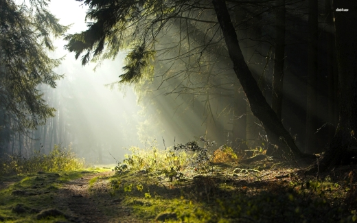 2521-sun-through-the-trees-1920x1200-nature-wallpaper