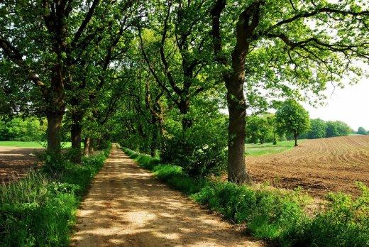 a_spring_lane_walk_by_jchanders-d55jid8
