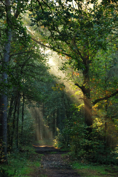 there_is_some_light_on_my_path_by_jchanders-d4df7ol