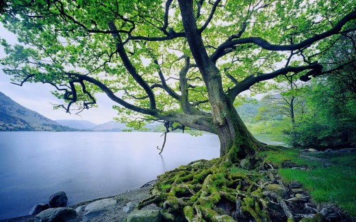 beautiful-tree-and-river1