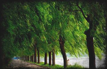 wind_trees2_811