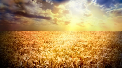 -Landscapes-Nature-Yellow-Fields-Fresh-New-Hd-Wallpaper--