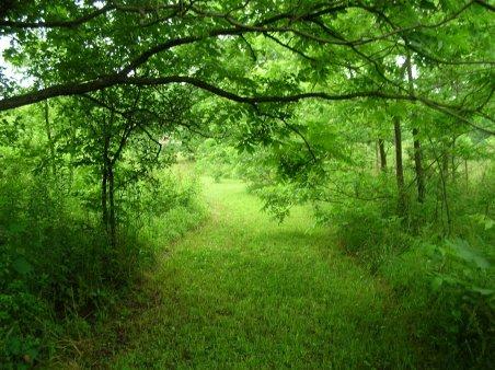 paradise-trail