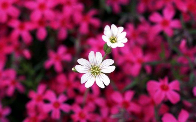 2 beautiful-flowers-in-pairs-900-2